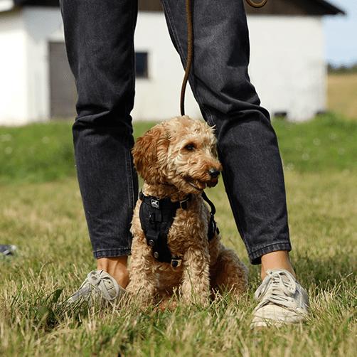 hundkurs på Gotland, hundkurs, vardagslydnad, hundkurs vuxen hund, Kompis positiv hundträning, hundtränare Anna Amnéus