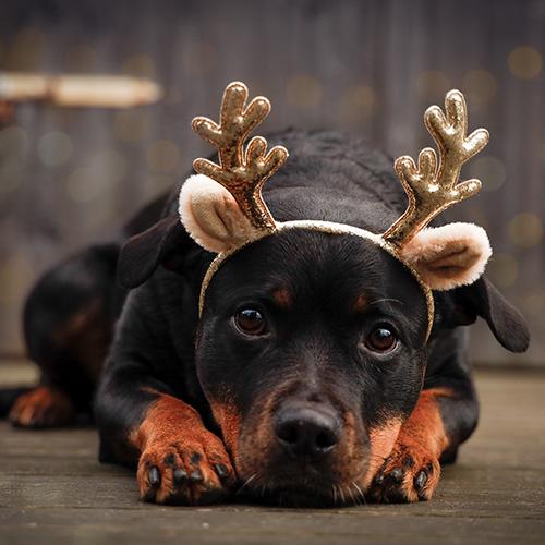 fota din hund kurs, fotokurs Gotland, hundträning Gotland, kul aktivering med hunden Gotland