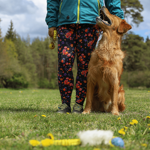 privatkurs hundträning, hundkurs privat, privat hundkurs Gotland