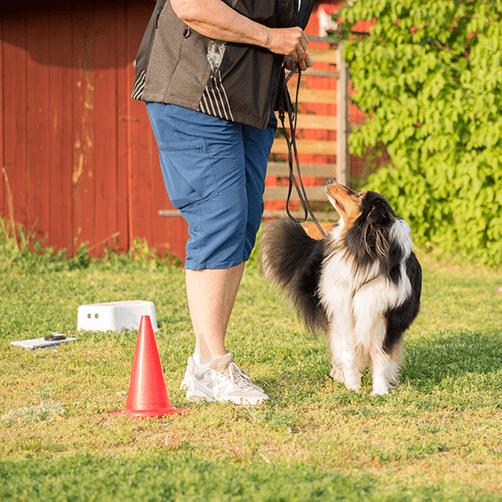 rallylydnad Gotland, rallylydnadskurs Gotland, rallylydnadsinstruktör