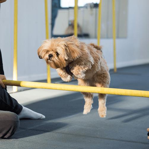 klick och trick, trickkurs Gotland, trixkurs, lär hunden trick