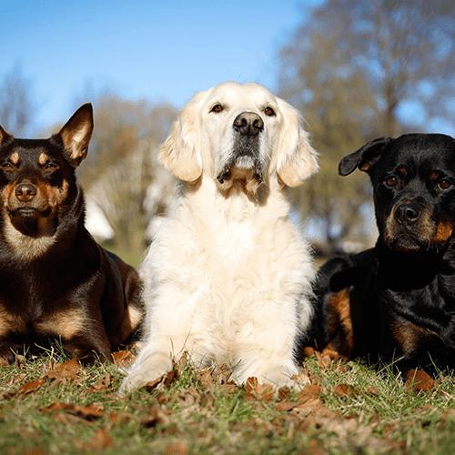 vardagslydnad fortsättning hundkurs på Gotland