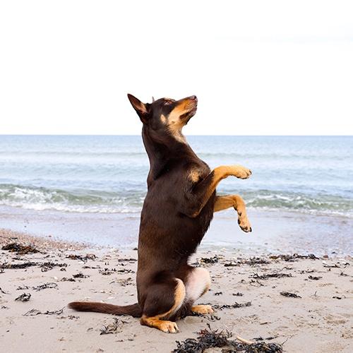 Aktiveringskurs Kompis hundträning på Gotland
