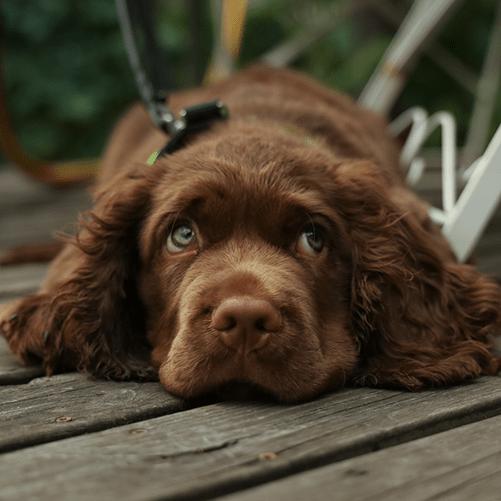 valpkurs på Gotland, hundkurs, hundkurs på Gotland, Kompis hundträning, Kompis positiv hundträning, Anna Amnéus, Anna Amnéus hundtränare